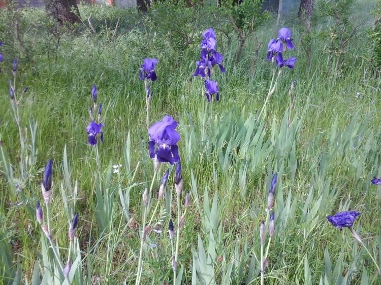passeggiata del primo maggio intorno a Castiglione del Lago 3 - Trasimeno Itinerari rari